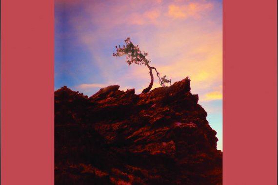 Chapbook by Jade Bradbury